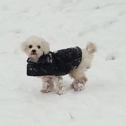 שלג באירופה